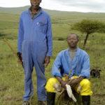 Herdar fångade av Gerhard Jörén på en av hans underbara bilder, KwaZulu, Sydafrika.