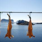 Längst ute på ön Röst i Lofoten började den trådlösa telegrafins historia med det första sända meddelandet (till Værøy via Sørvågen) 1903. Att också torsk har en historia här är mer välkänt.